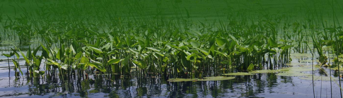lake management image