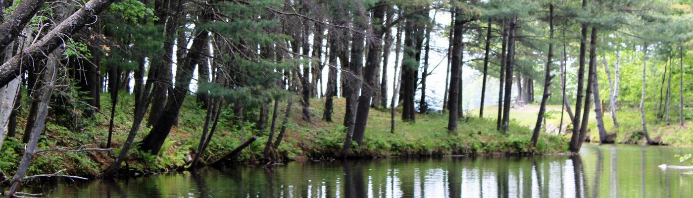 lake tomahawk trees
